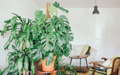 Apartment Renters Tips for Living Green
